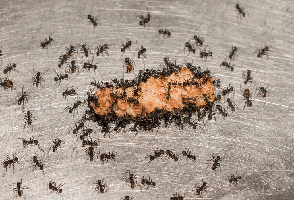 Feeling antsy? Join the club. Nearly 2 million people on Facebook are pretending to be ants.